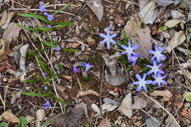 3月29・31日の庭。_c0124100_16343414.jpg