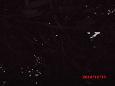 a0019212_19182972.jpg