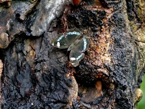 森の青い宝石_a0315918_22273160.jpg
