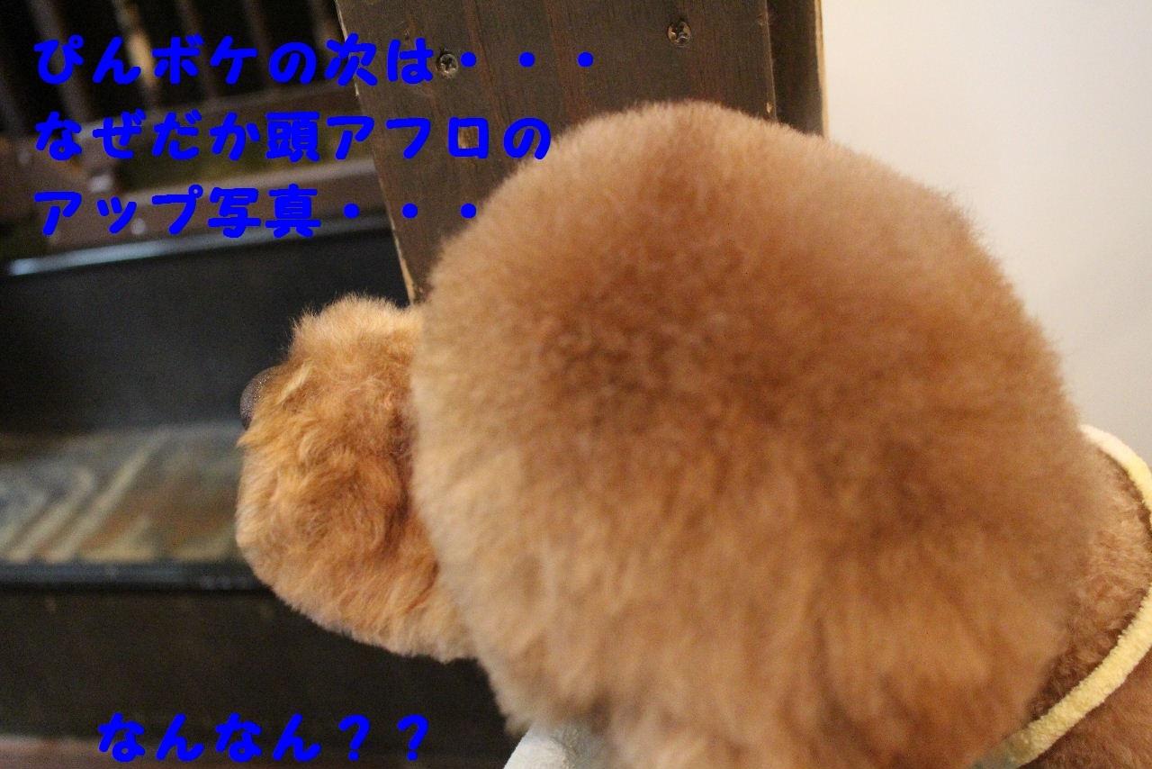 b0130018_08274960.jpg