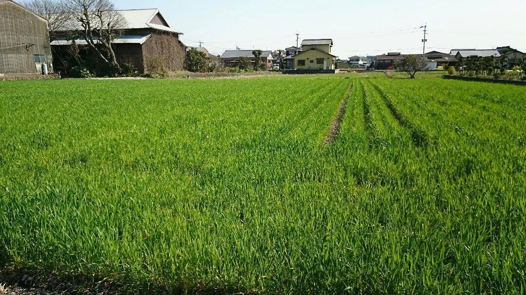 草刈りと、野菜。_a0125419_04150420.jpg