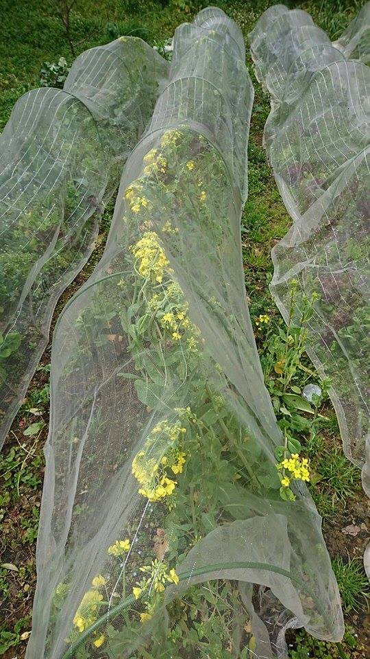 草刈りと、野菜。_a0125419_04394920.jpg