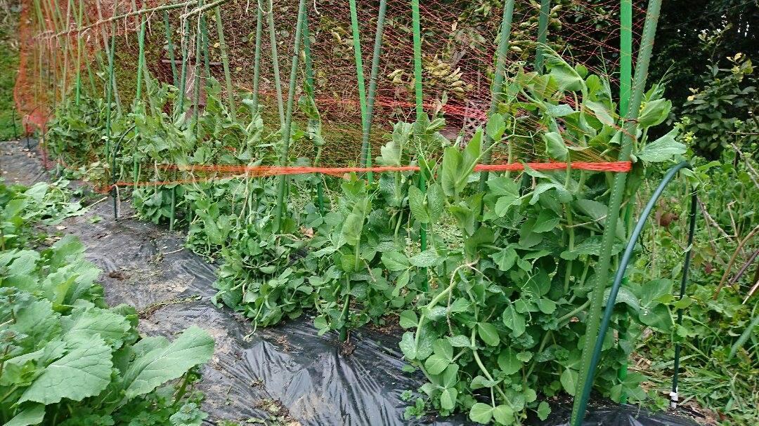 草刈りと、野菜。_a0125419_04403188.jpg