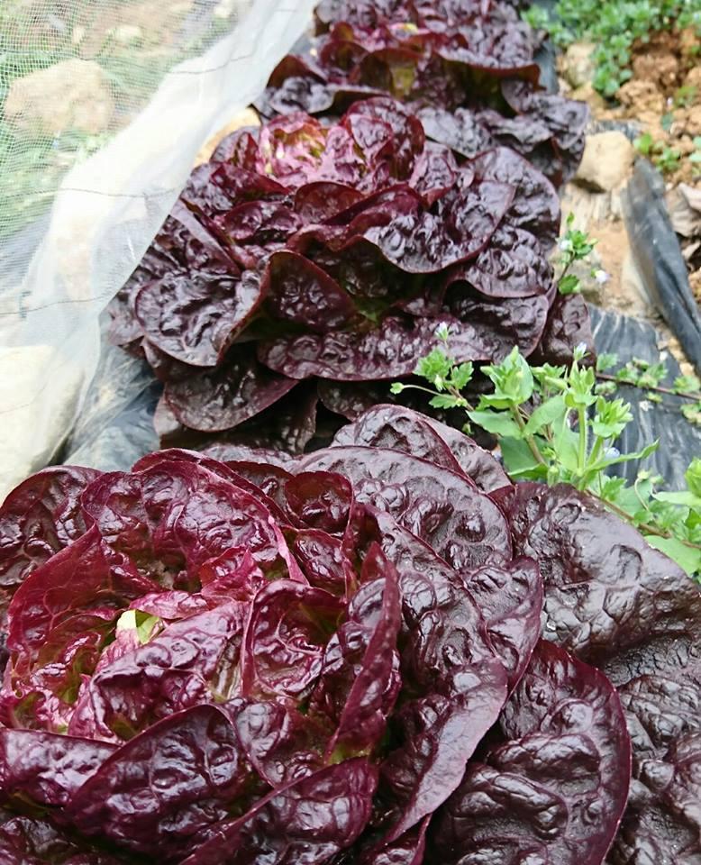 草刈りと、野菜。_a0125419_04483624.jpg