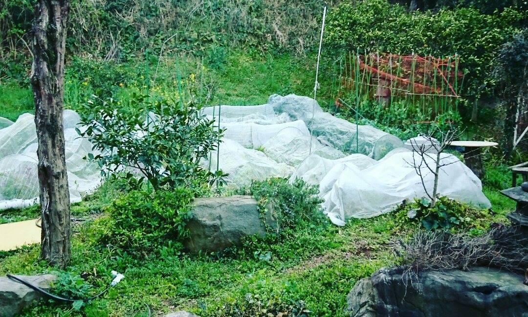 草刈りと、野菜。_a0125419_04485424.jpg