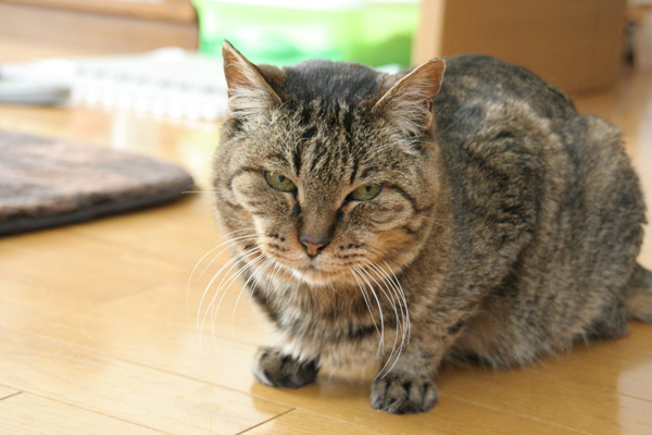 にゃんず日記と登場猫人たちの紹介_d0355333_21441055.jpg