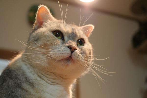にゃんず日記と登場猫人たちの紹介_d0355333_21565291.jpg