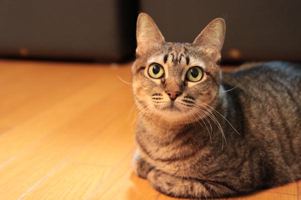 にゃんず日記と登場猫人たちの紹介_d0355333_21580310.jpg