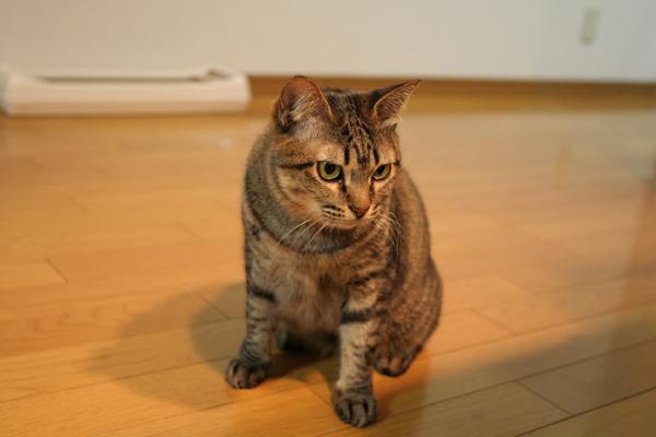 にゃんず日記と登場猫人たちの紹介_d0355333_21581159.jpg