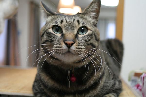 にゃんず日記と登場猫人たちの紹介_d0355333_21583443.jpg