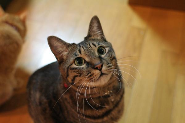 にゃんず日記と登場猫人たちの紹介_d0355333_21584679.jpg