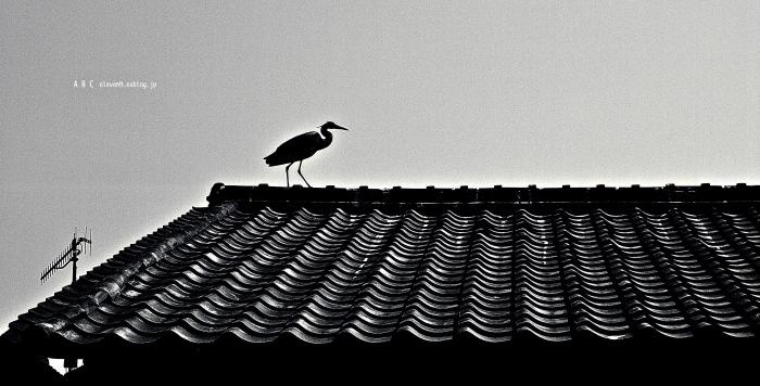 屋根の上を歩く_f0315034_15341390.jpg