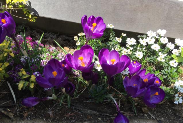 春の香りいっぱい_d0158258_07172093.jpg
