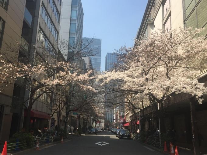 桜が咲いた!_b0093660_16470791.jpg
