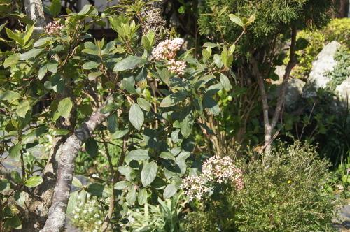 花木の花盛り_e0181373_21042281.jpg