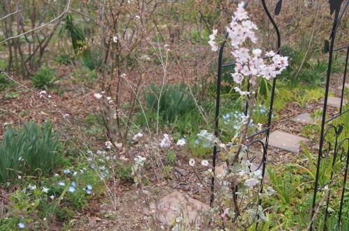 花木の花盛り_e0181373_21053272.jpg