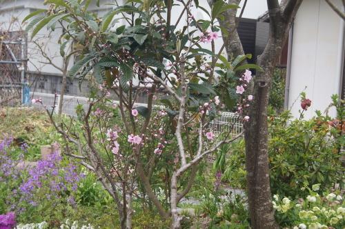 花木の花盛り_e0181373_21054050.jpg