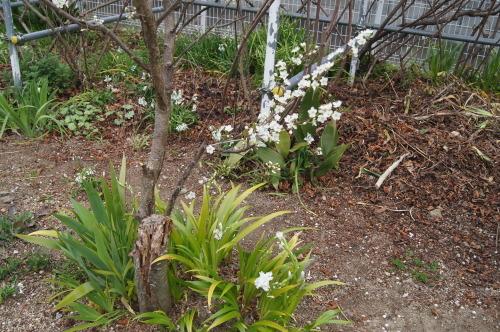 花木の花盛り_e0181373_21054910.jpg