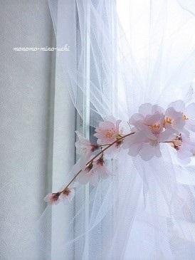 キッチンに春、、ふわり♪_f0368691_14301029.jpg
