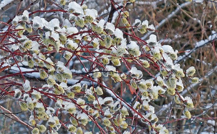春の雪_d0162994_09300252.jpg