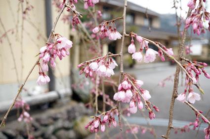 春の主役タンポポ_b0145296_10314233.jpg
