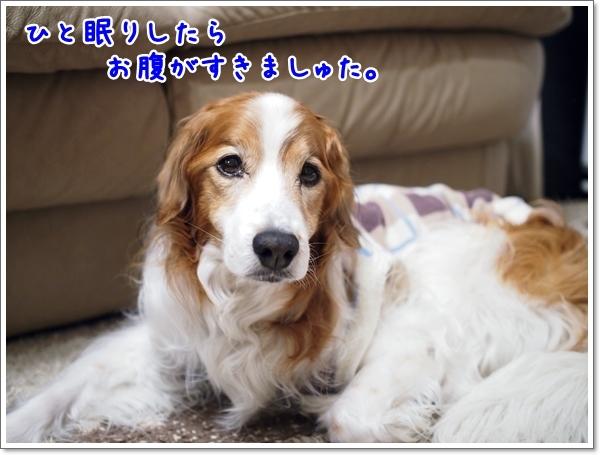 d0013149_09564020.jpg