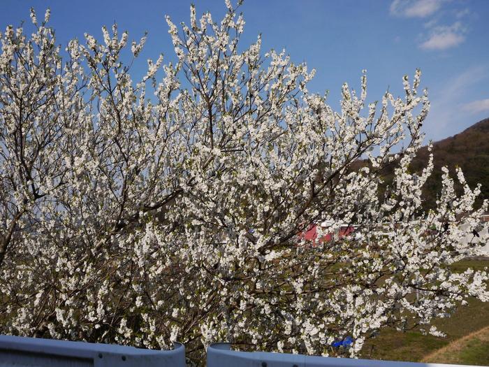 白梅咲く里山の風景_b0093754_23224099.jpg