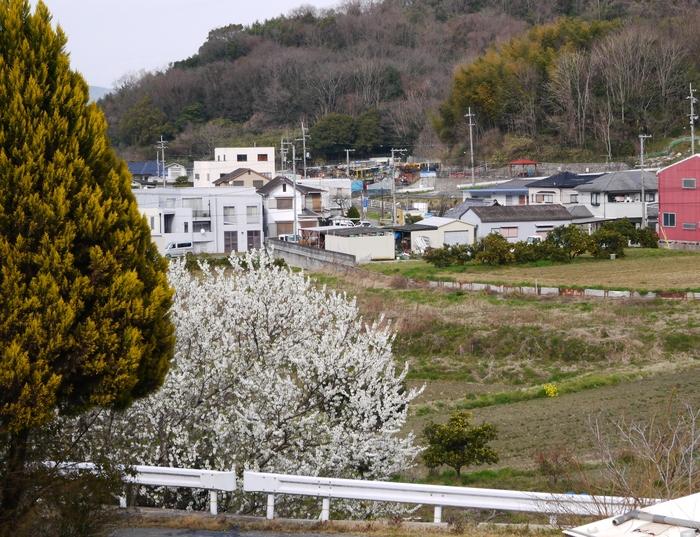 白梅咲く里山の風景_b0093754_23225358.jpg