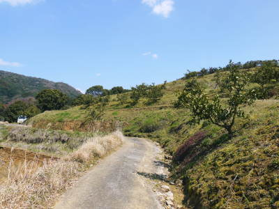 山鹿のみかん 社方園 山を開いて新たなみかんの果樹を植える!夢を追う匠の話!(その2)_a0254656_17304455.jpg