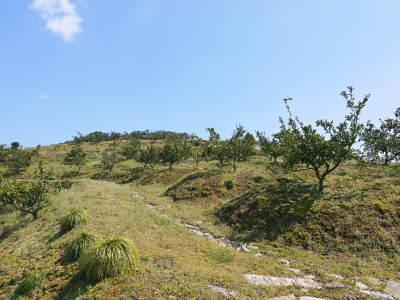 山鹿のみかん 社方園 山を開いて新たなみかんの果樹を植える!夢を追う匠の話!(その2)_a0254656_17331887.jpg