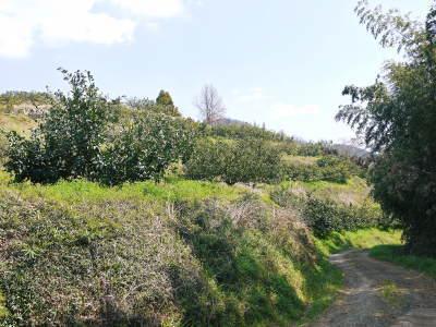 山鹿のみかん 社方園 山を開いて新たなみかんの果樹を植える!夢を追う匠の話!(その2)_a0254656_17372027.jpg