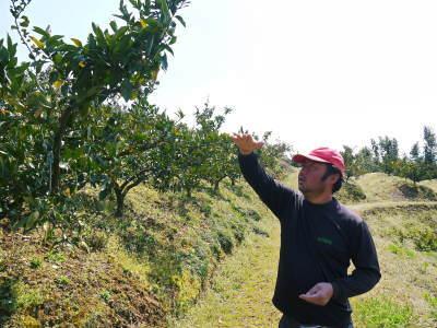 山鹿のみかん 社方園 山を開いて新たなみかんの果樹を植える!夢を追う匠の話!(その2)_a0254656_17424028.jpg