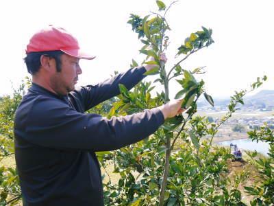 山鹿のみかん 社方園 山を開いて新たなみかんの果樹を植える!夢を追う匠の話!(その2)_a0254656_17570816.jpg
