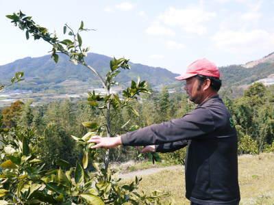 山鹿のみかん 社方園 山を開いて新たなみかんの果樹を植える!夢を追う匠の話!(その2)_a0254656_18065489.jpg
