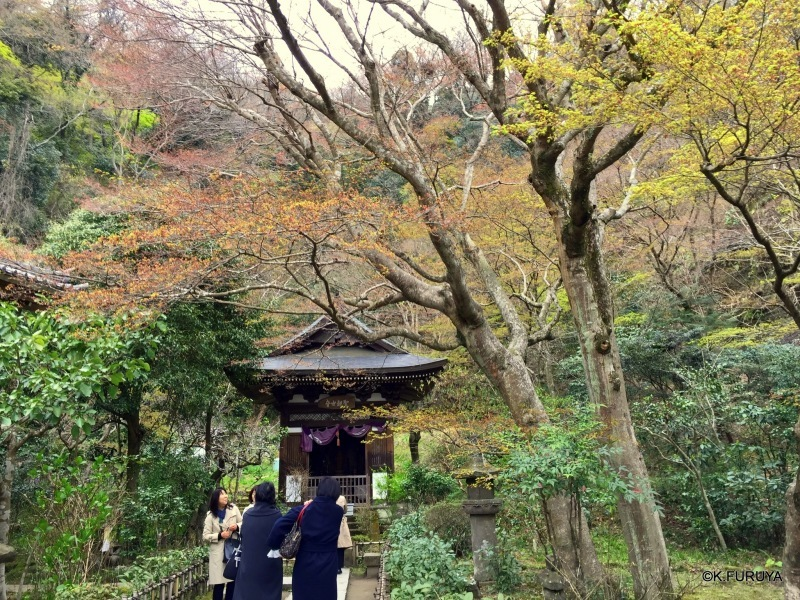 ☂ 雨の鎌倉散策 ☂ 円覚寺 其の壱_a0092659_22063329.jpg
