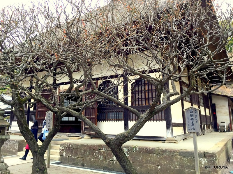 ☂ 雨の鎌倉散策 ☂ 円覚寺 其の壱_a0092659_22480202.jpg