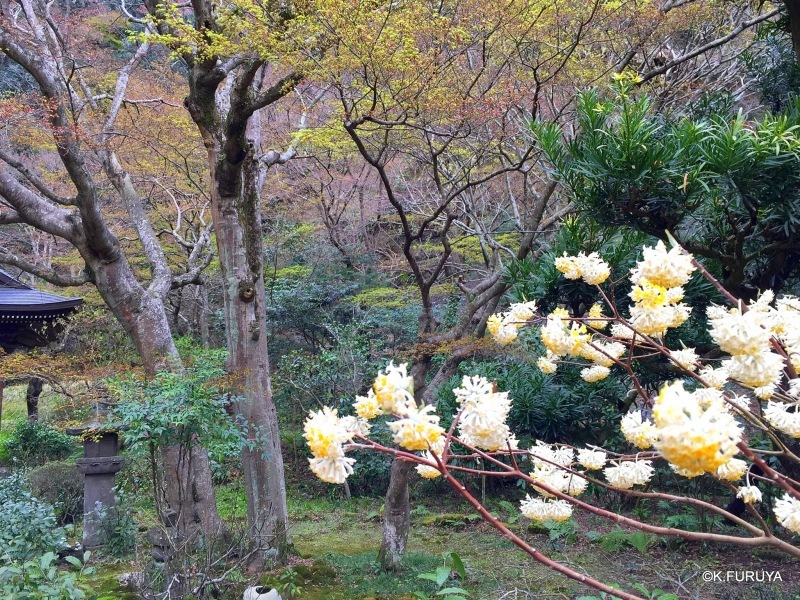 ☂ 雨の鎌倉散策 ☂ 円覚寺 其の壱_a0092659_22524232.jpg