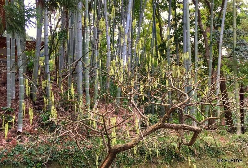 ☂ 雨の鎌倉散策 ☂ 円覚寺 其の壱_a0092659_23013085.jpg