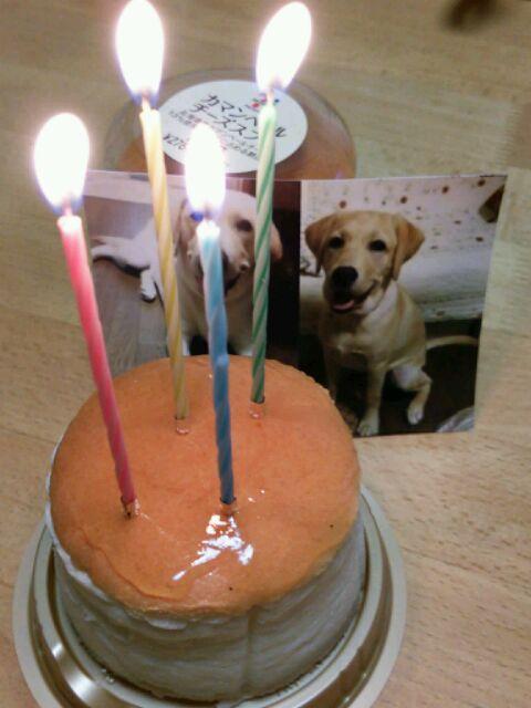 フィーゴ4歳のお誕生日♪お(^O^)め(^。^)で(^O^)と(^o^)う(^。^)♪_b0255266_2143624.jpg