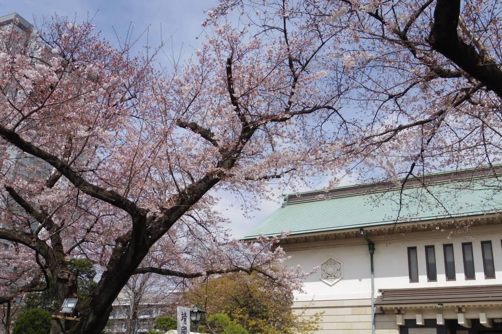 昨日は東京のソメイヨシノが満開になった???_a0246407_15200249.jpg