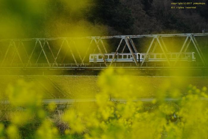 春の色に_d0309612_22280690.jpg
