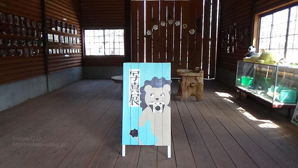 2017.4.2 宇都宮動物園☆キリンの赤ちゃん【Giraffe baby】_f0250322_2152810.jpg
