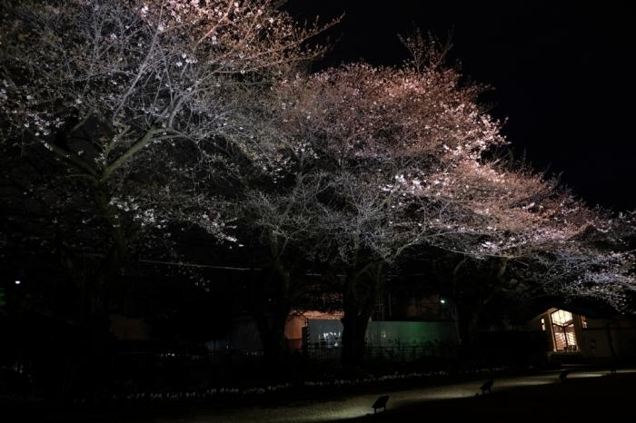 自由学園 東京 池袋 桜を見る会_f0050534_08074164.jpg