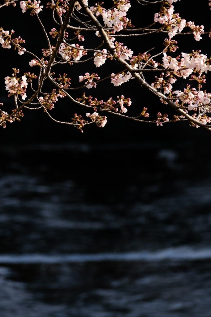 板橋 桜 20170402#2_f0050534_08243492.jpg