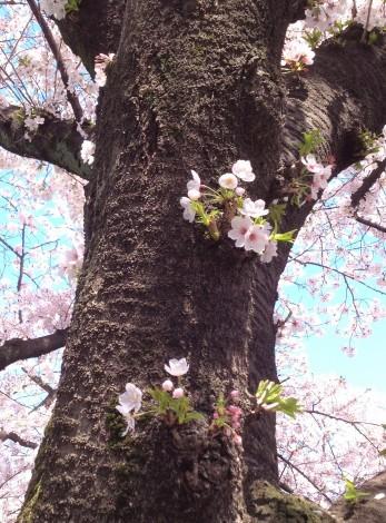 マヤ暦でみる4月の運勢と好調サイン_b0213435_20133788.jpg