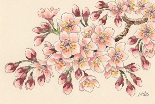 花の水彩画あれこれ。_b0089338_19553281.jpg