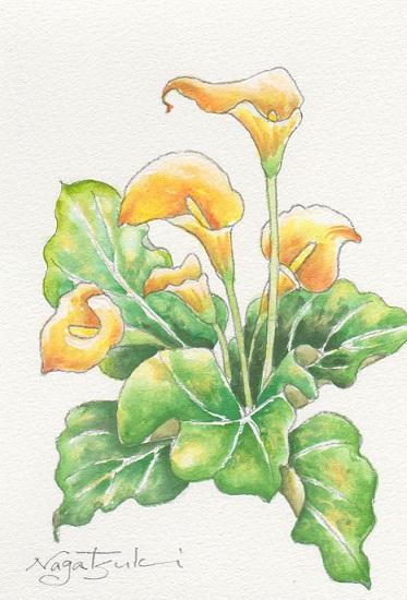 花の水彩画あれこれ。_b0089338_19562553.jpg
