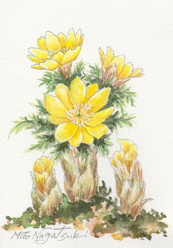 花の水彩画あれこれ。_b0089338_19563883.jpg