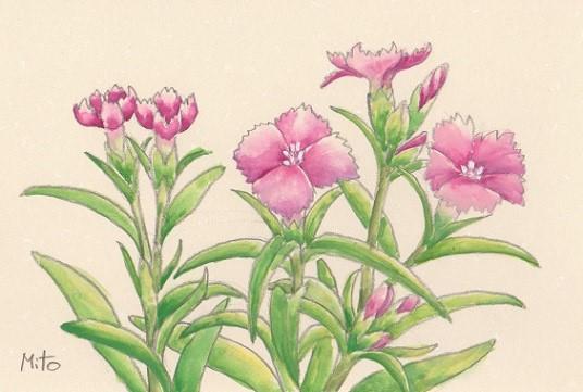 花の水彩画あれこれ。_b0089338_1956997.jpg