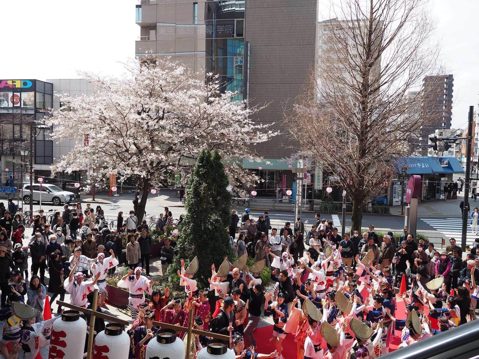 第36回 せいせき桜まつり_b0360240_19370506.jpg